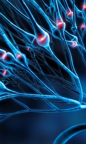 synapsy w mózgu